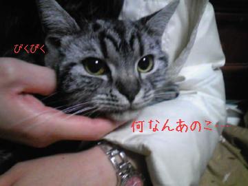 Yuzu_04