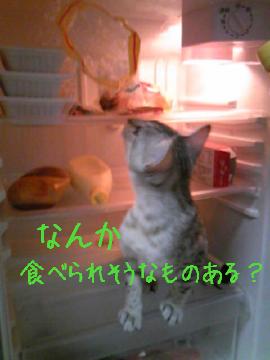 Yona_neco_02