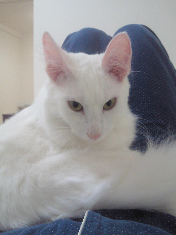 白猫の特等席